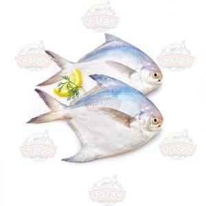 ماهی-حلوا-سفید