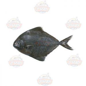 ماهی-حلوا-سیاه