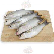 ماهی بیاح1