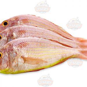 ماهی سلطان ابراهیم