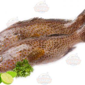 ماهی هامور