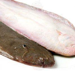 ماهی زبان